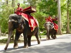 Elephant parade!
